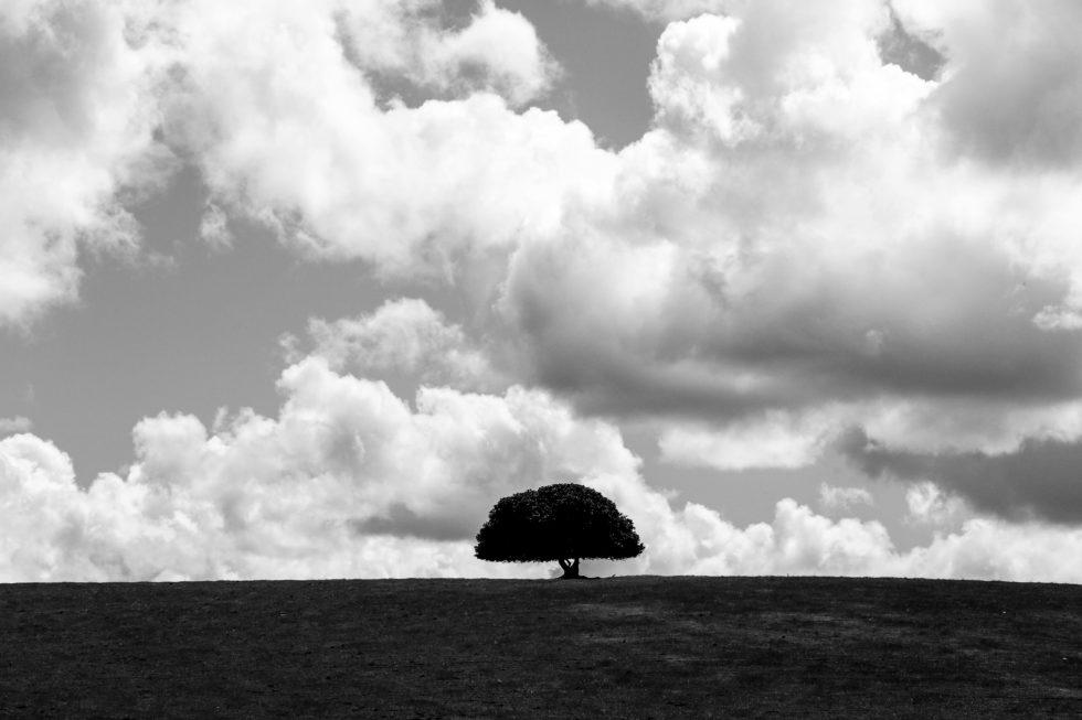 landscapes-86